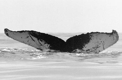 CS29. Photo credit: Leigh Hilbert. 1998.